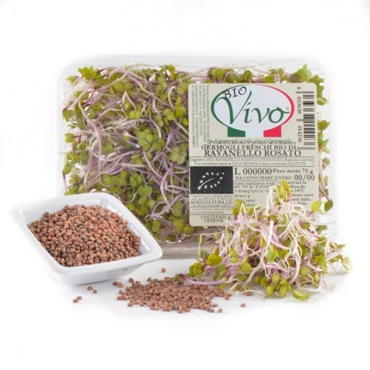 Pinkish Radish's sprouts - 75 gr