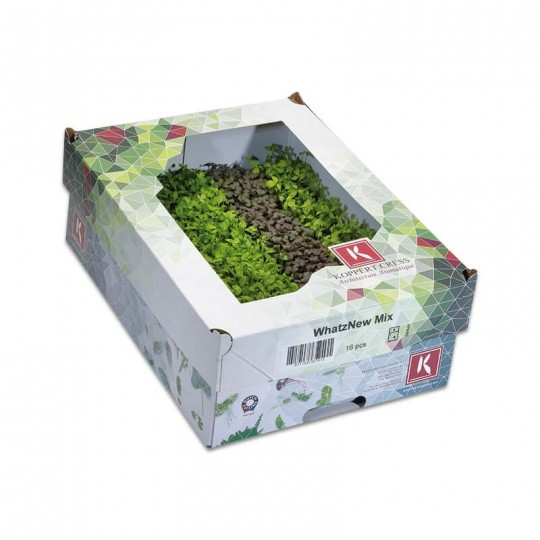 WhatZnew Mix Koppert Cress Acquista Online su fruttaweb.com