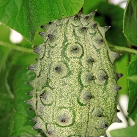 Kiwano - 1 frutto