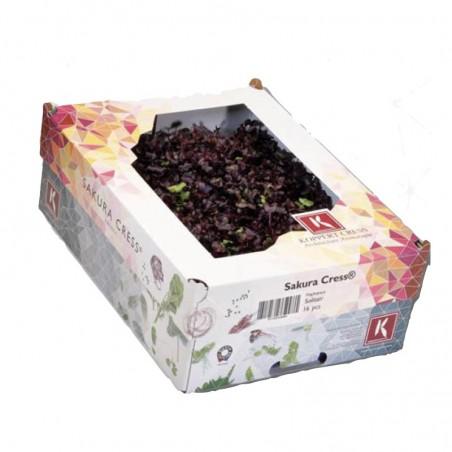 Crescione Sakura Cress Koppert Cress Acquista Online su fruttaweb.com