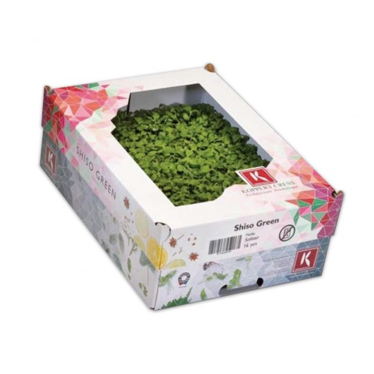 Crescione Shiso Verde Cress Koppert Cress