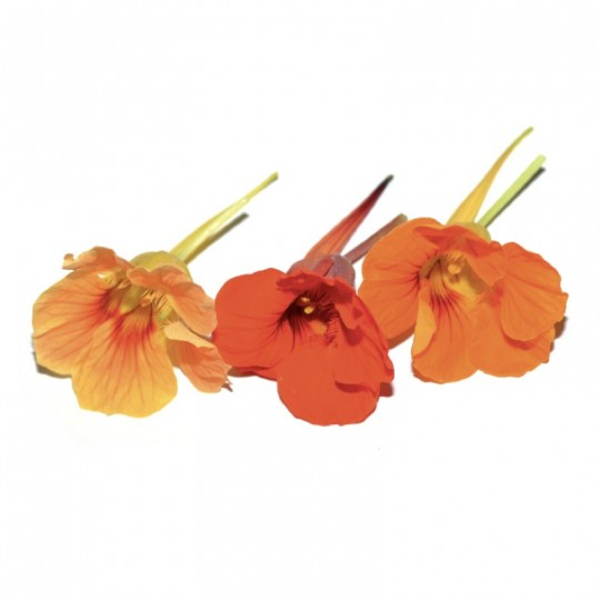 Fiori Capucine Blossom Acquista Online su fruttaweb.com