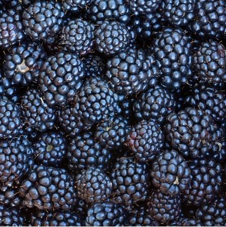 Purea di Mirtillo Acquista Online su fruttaweb.com