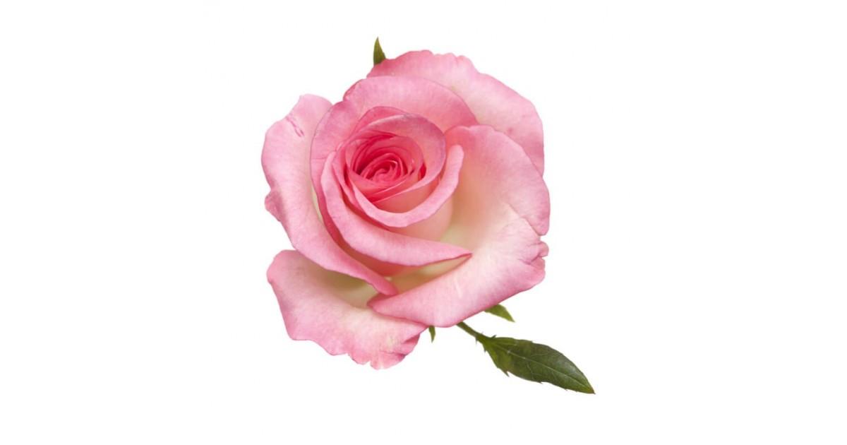 Rose Commestibili Acquista Online Fiori Commestibili