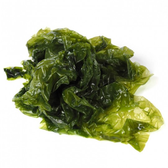 Alga Ulva (Lattuga di Mare)