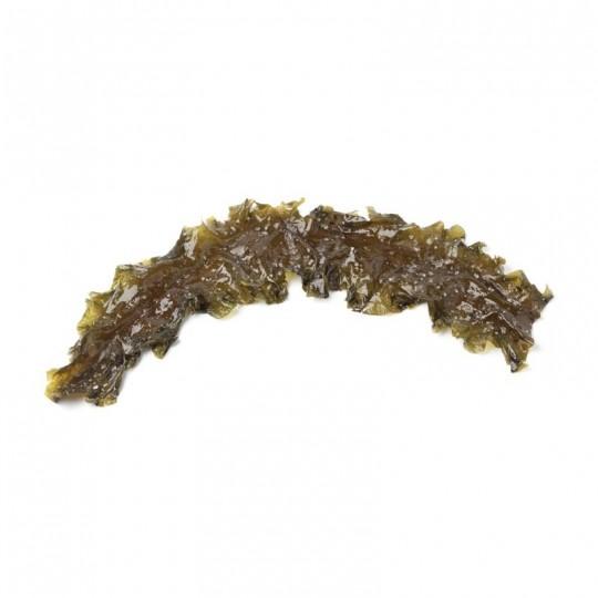 Alga Kombu Royal