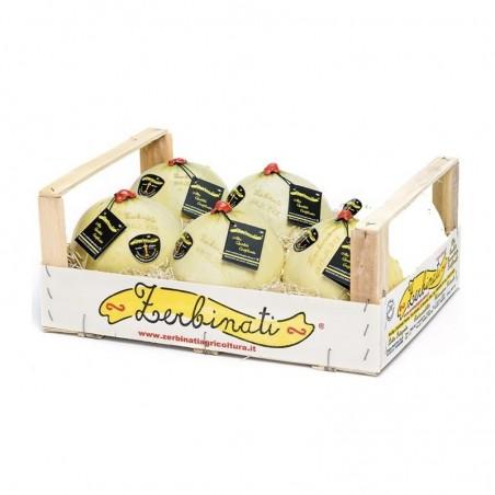 Melone Jolly Zerbinati in vendita su FruttaWeb