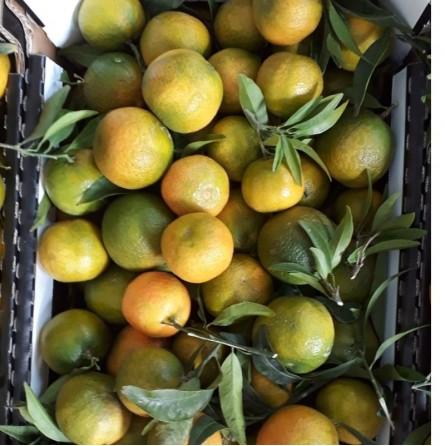 Clementine Acquista Online su fruttaweb.com