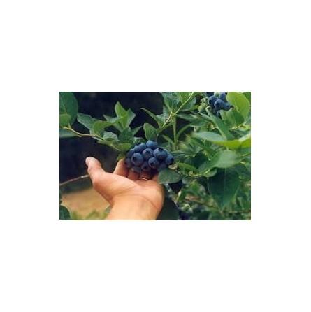 Mirtilli freschi - 125 gr