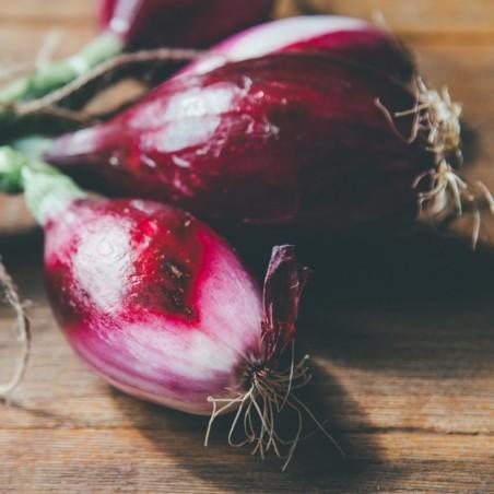Cipollotto rosso di Tropea in vendita online su FruttaWeb.com