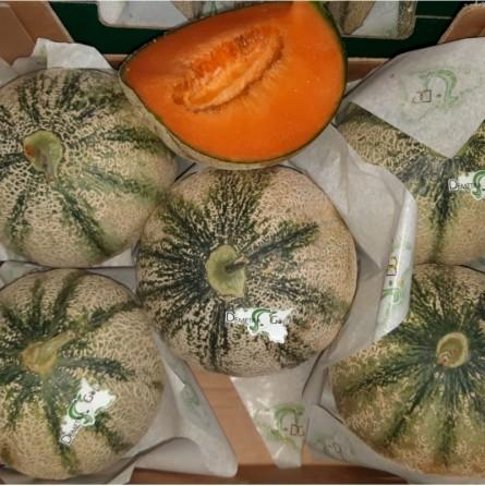 Melone Retato: Acquista Online con un Click su FruttaWeb.com