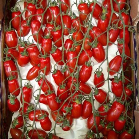 Pomodoro mini San Marzano rosso di Pachino IGP
