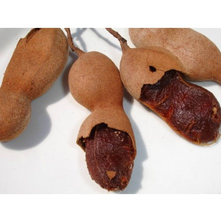 Tamarindo fresco in vendita online su FruttaWeb