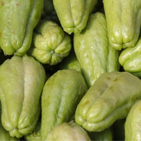 Chayote (o Sechio o Melanzana spinosa) - 1 kg