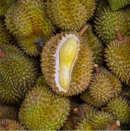 Durian in vendita online su FruttaWeb.com