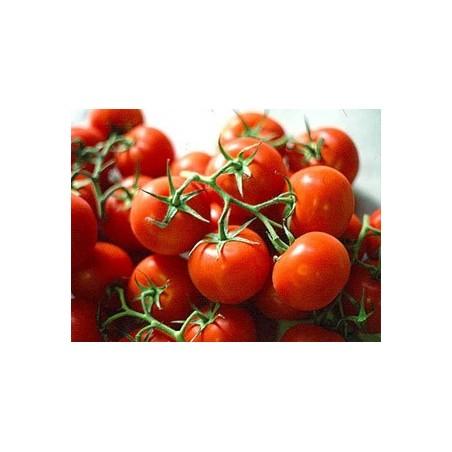 Pomodoro ciliegino Pachino - 500 gr