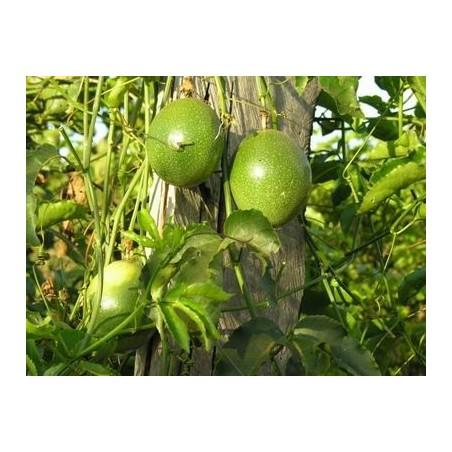 Maracuja Via Aerea: Acquista Online con un Click su FruttaWeb.com