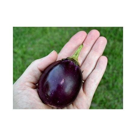 Mini melanzane: Acquista Online con un Click su FruttaWeb.com