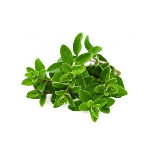 Maggiorana fresca - 20 gr in vassoio