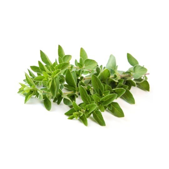 Oregano fresh - 20 gr in tray