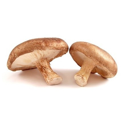 Funghi Shii-take freschi - 1,5 kg - Origine Cina: disponibili ora su FruttaWeb.com