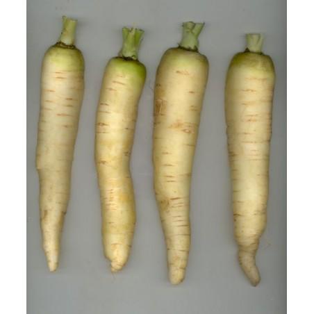 Carote bianche - 1 kg - Origine Olanda