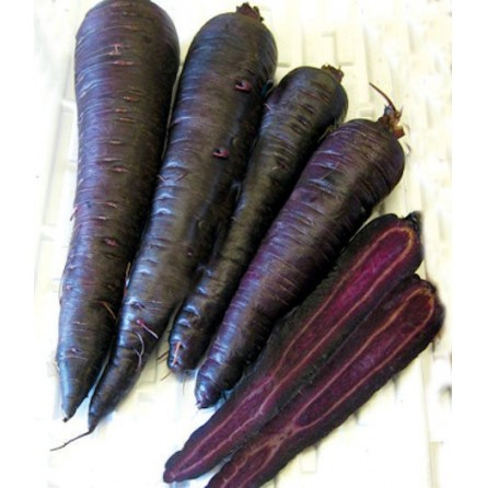 Carote viola deep purple - 1 kg