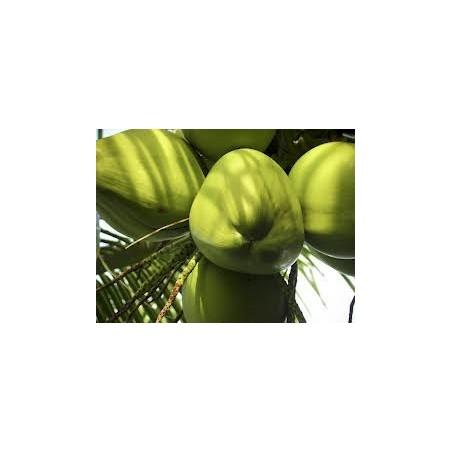 Cocco giovane (fresco): Acquista Online con un Click su FruttaWeb.com