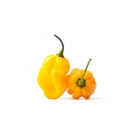 Habanero giallo fresco