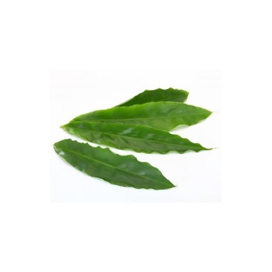 Foglie di cardamomo 15 foglie