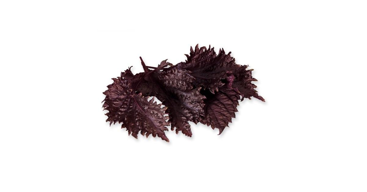 Foglie di shiso porpora 30 foglie