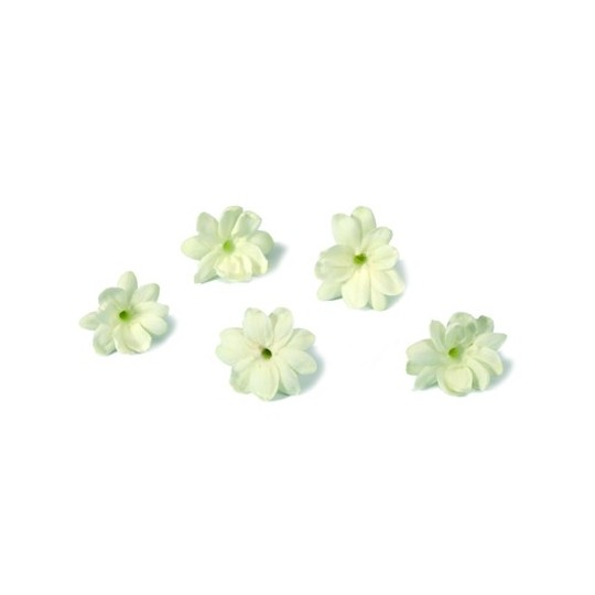 Jasmine Blossom 25 flowers