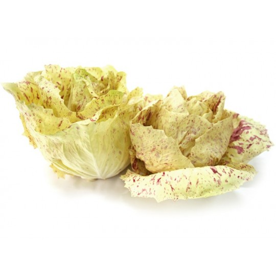 Variegated radicchio of Castelfranco