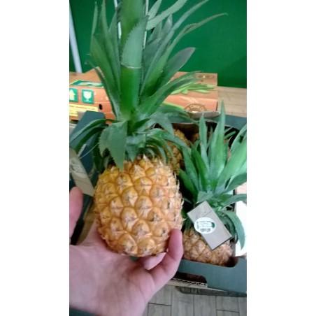 """Ananas Baby """"via aerea"""" da gr 450"""