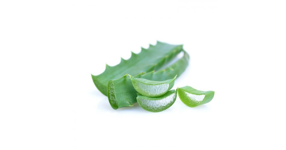 Aloe Arborescens Foglie Fresche: acquistale online su FruttaWeb.com