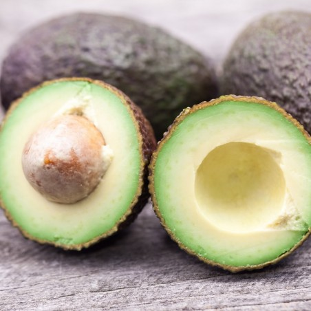 Avocado fresco Hass: acquista online ora