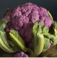 Cavolfiore Viola in vendita online su FruttaWeb.com