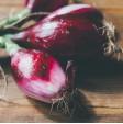 Cipolla rossa di Tropea fresca in vendita online su FruttaWeb.com