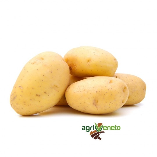 Colomba potatoes new crop 2016