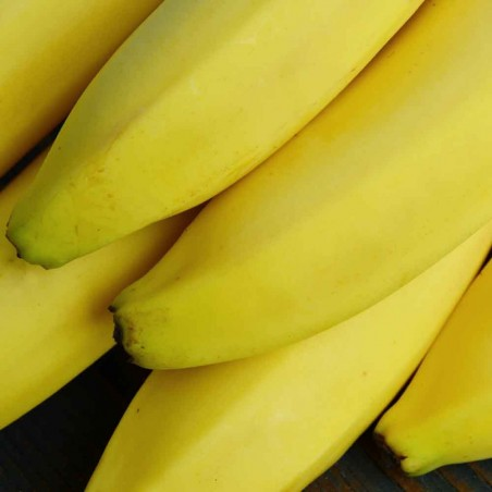 Banane biologica Almaverde Bio: acquista online su FruttaWeb.com