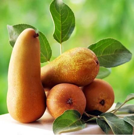"""Pere italiane biologiche """"Almaverde Bio"""" in vendita su FruttaWeb"""