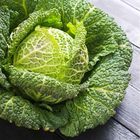 """Cavolo Verza Verde """"- acquista online su FruttaWeb"""