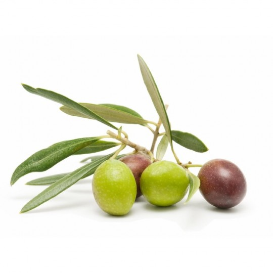 "Fresh Olives ""Bella di Cerignola"" on FruttaWeb.com"