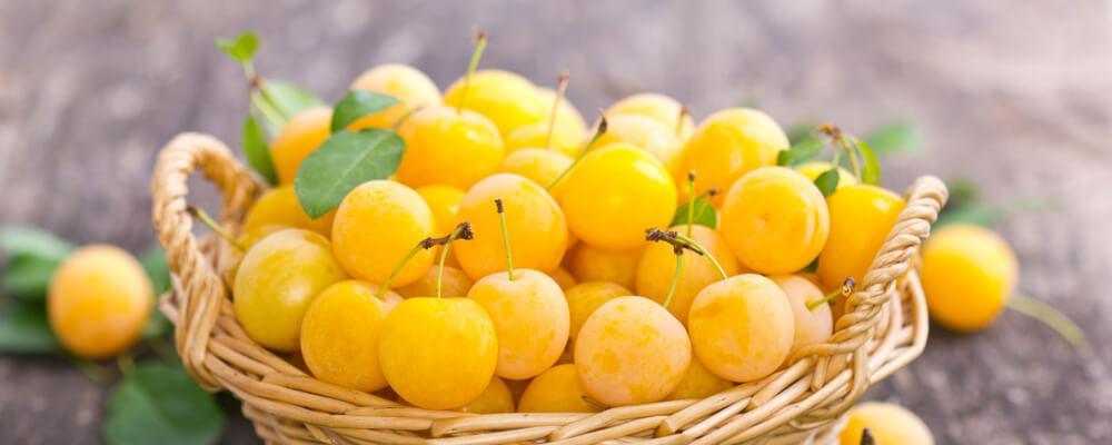 susine-gialle-acquista-online