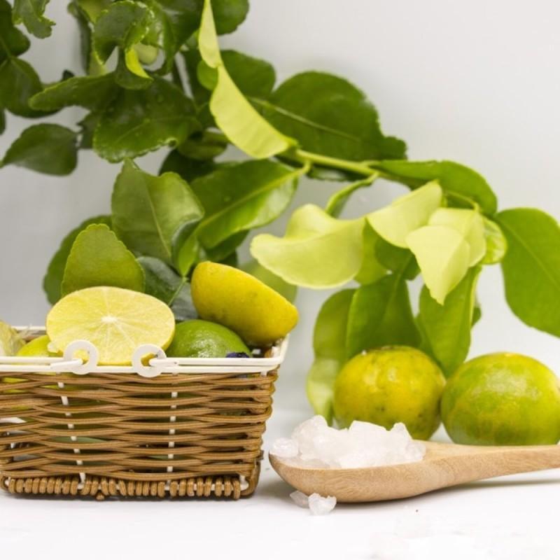 bergamotto calabrese fresco acquista online fruttaweb