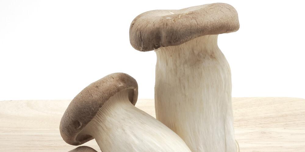 funghi freschi cardoncello acquista online fruttaweb