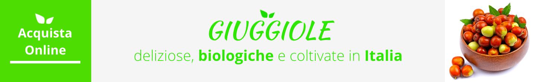 giuggiole acquista online fruttaweb
