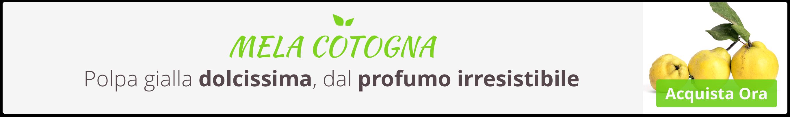 Acquista Online Mela Cotogna, Pera