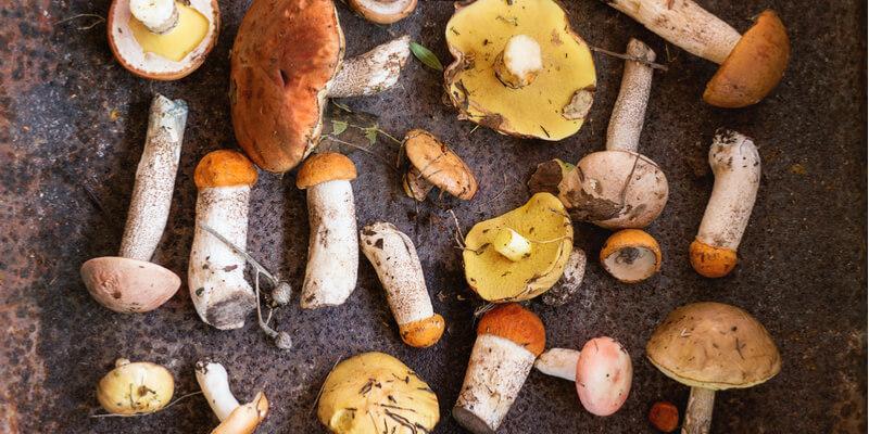 funghi misti tavolo