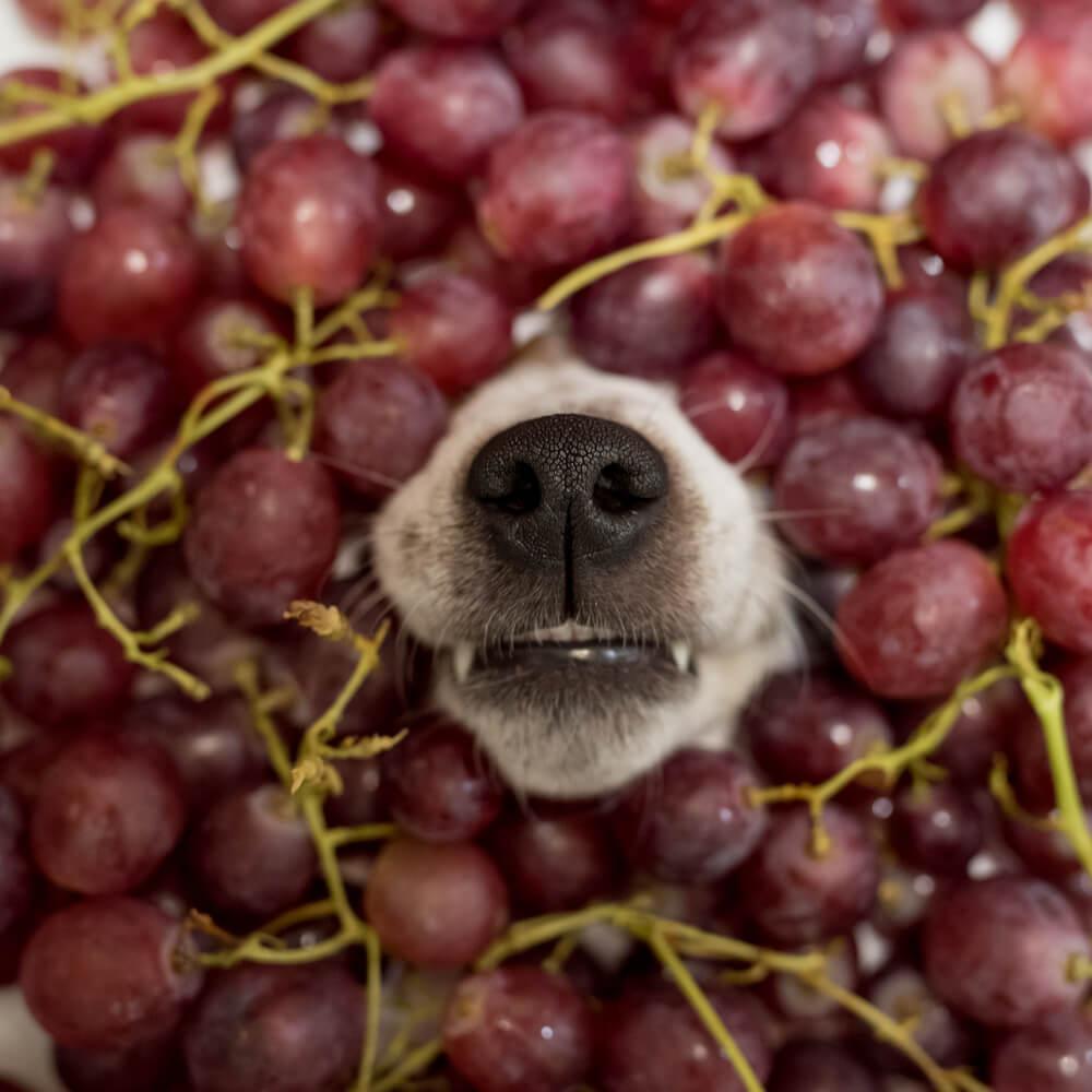 frutti che possono mangiare i cani quali sono blog di